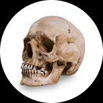 Referensskallar av Skull Shoppe